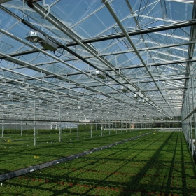China 4mm clear tempered glass for greenhouse, 4mm transparent toughened glass greenhouse,glass panel for greenhouse factory